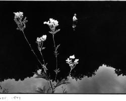 """""""Doubs"""", de la série Jura, Août 1974© Monique Jacot, courtesy Galerie Esther Woerdehoff"""